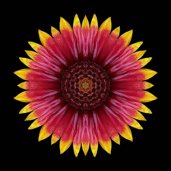 Photograph - Galliardia Arizona Sun Flower Mandala by David J Bookbinder