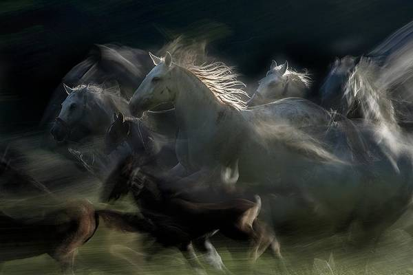 Run Wall Art - Photograph - Gallop by Milan Malovrh