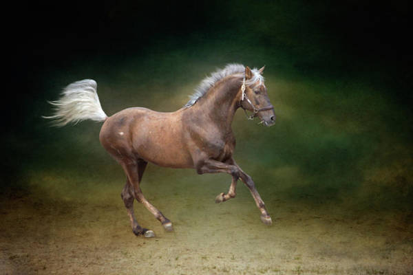 Andalusian Wall Art - Photograph - Galloping Horse by Christiana Stawski
