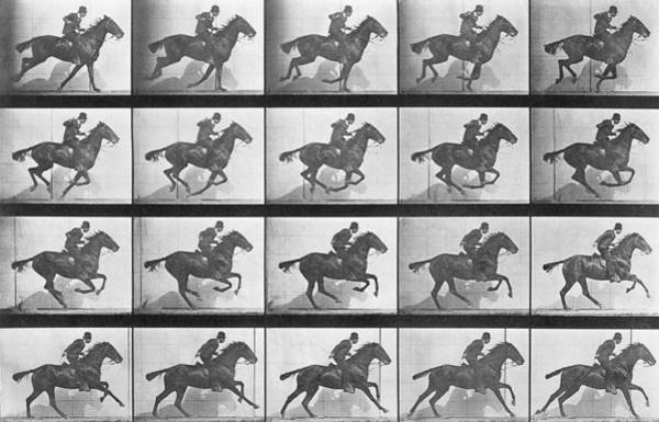 Dressage Wall Art - Photograph - Galloping Horse by Eadweard Muybridge
