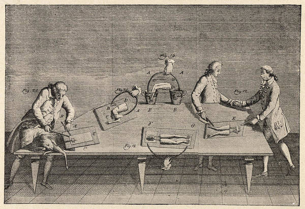 Nerves Drawing - Galvani Experimented With  Static by Mary Evans Picture Library