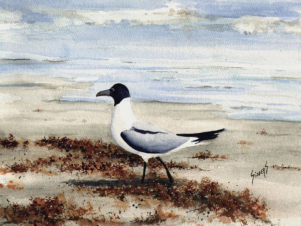 Gull Painting - Galveston Gull by Sam Sidders