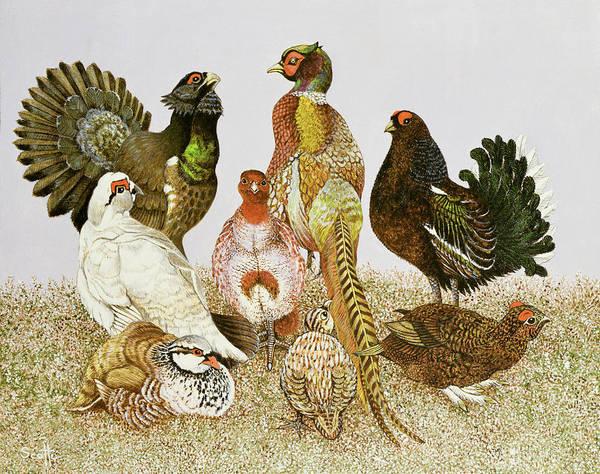 Pheasant Photograph - Game Birds by Pat Scott