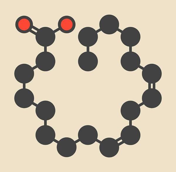 Omega Photograph - Gamma-linolenic Acid Molecule by Molekuul