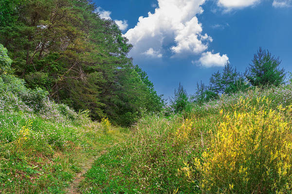 Photograph - Gap Trail by Mary Almond