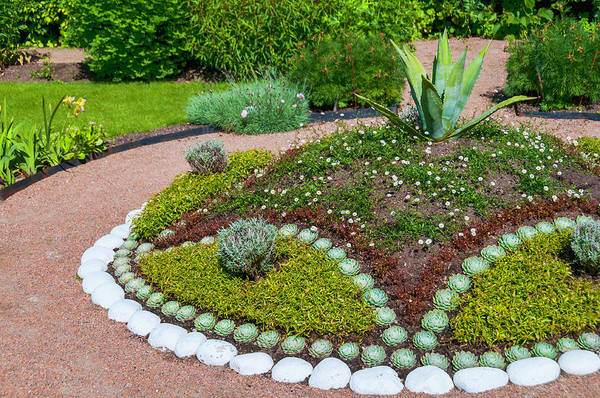 Ornamental Grass Photograph - Garden Arrangement by Martin Wahlborg