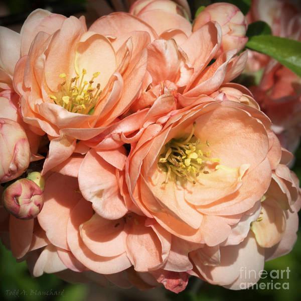 Photograph - Garden Beauties by Todd Blanchard