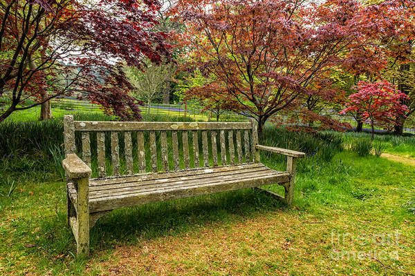Bluebell Photograph - Garden Bench by Adrian Evans