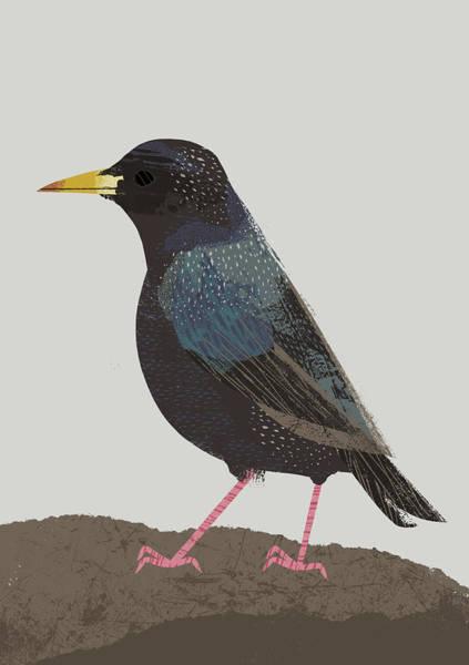 Manchester Photograph - Garden Bird Starling by Chris Madden