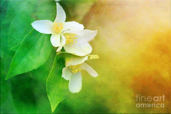Photograph - Garden Bliss by Beve Brown-Clark Photography