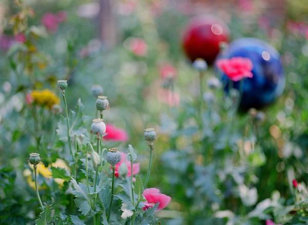 Bokeh Digital Art - Garden Bokeh by Linda Unger
