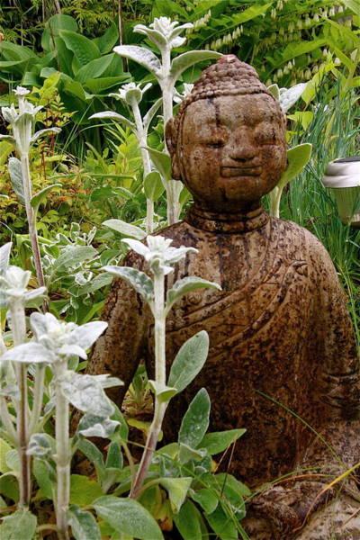 Photograph - Garden Buddha by Alicia Kent