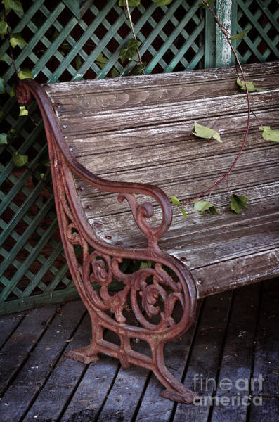 Metal Furniture Photograph - Garden Chair by Carlos Caetano