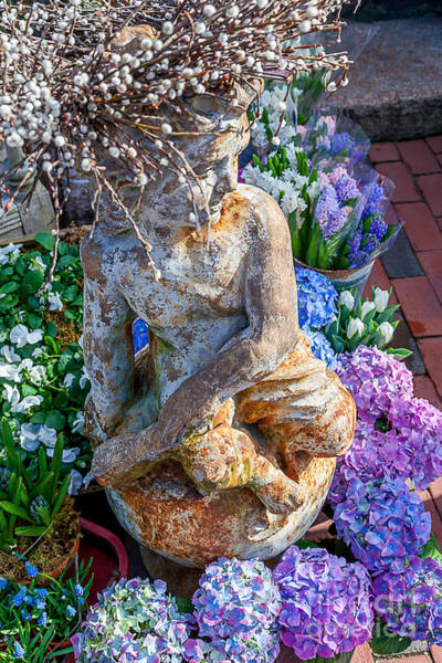 Photograph - Garden Cherub by Susan Cole Kelly