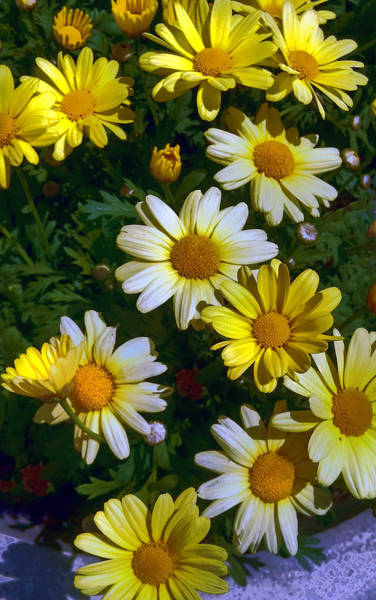 Photograph - Garden Delight by Donna Proctor