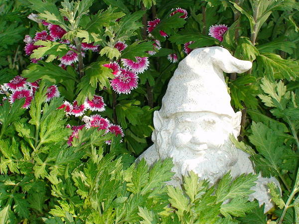 Photograph - Garden Gnome by Charles Kraus