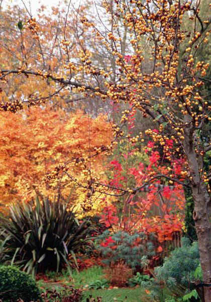 European Hornet Photograph - Garden In Autumn by Rachel Warne/kristina Fitzsimmons Msgd/ Science Photo Library