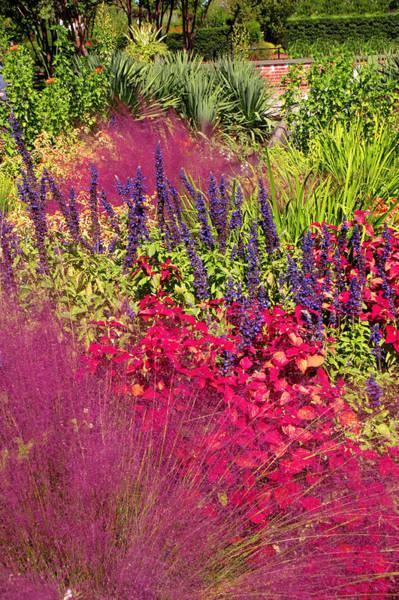 Vertical Garden Photograph - Garden In The Fall by Bauhaus1000