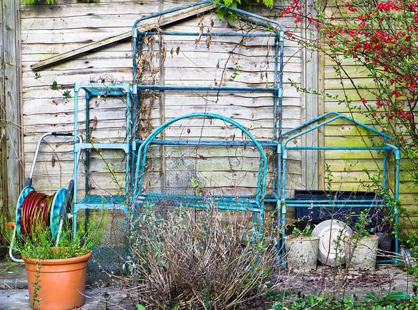 Blue Berry Photograph - Garden Items by Tom Gowanlock