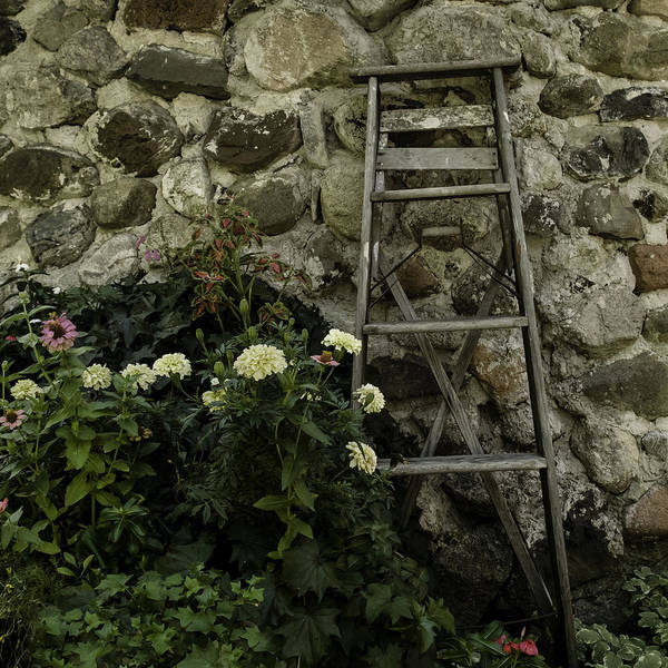 Photograph - Garden Ladder by Curtis Dale