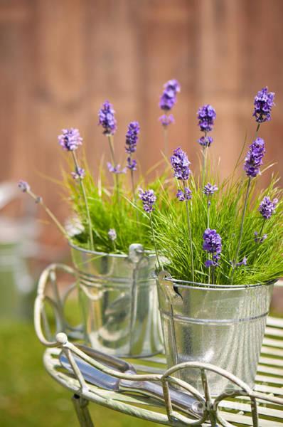 Trowel Photograph - Garden Lavender by Amanda Elwell