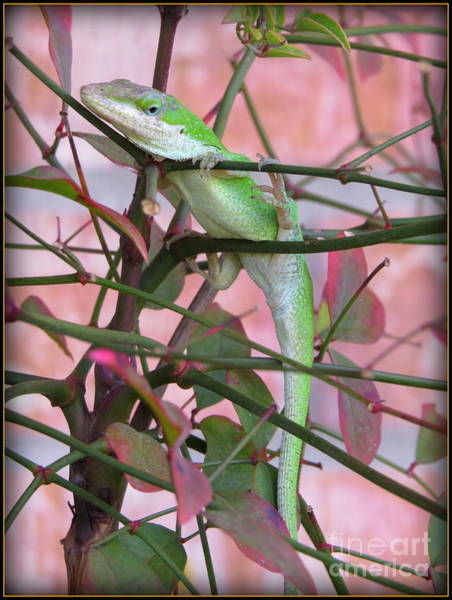 Brown Anole Wall Art - Photograph - Garden Lizard - Beautiful And I Know It by Ella Kaye Dickey