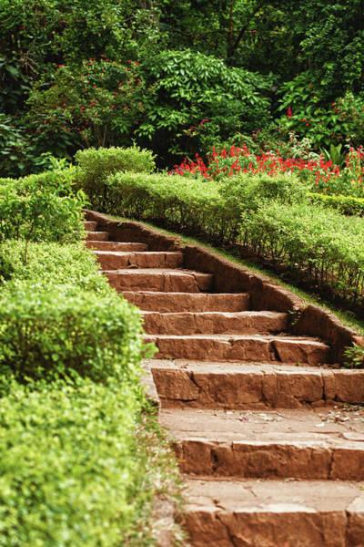 Vertical Garden Photograph - Garden by Marcomarchi