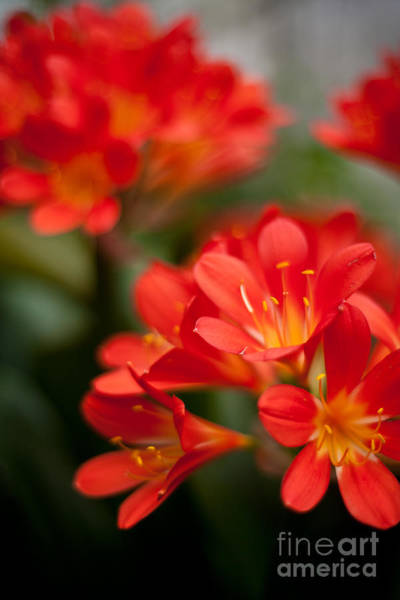 Clivia Wall Art - Photograph - Garden Of Bliss by Mike Reid