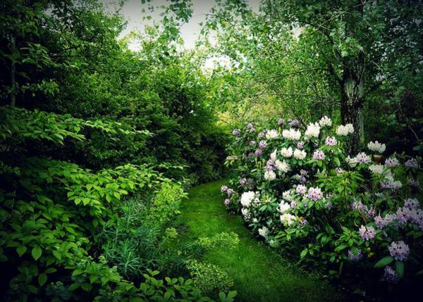 Photograph - Garden Of Enchantment by Patricia Strand
