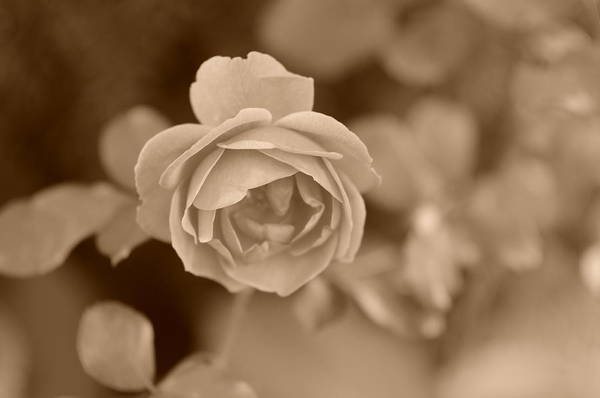 Photograph - Garden Of Love by Miguel Winterpacht