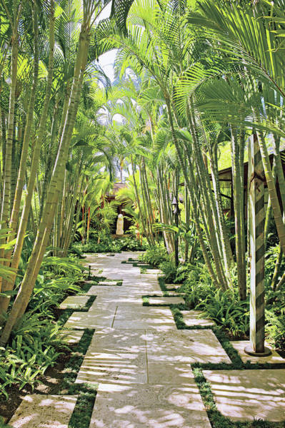 No People Photograph - Garden Path And Palm Trees by Mary E. Nichols
