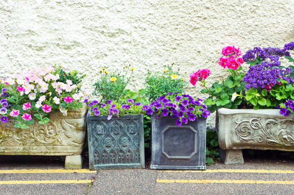 Trough Wall Art - Photograph - Garden Plants by Tom Gowanlock