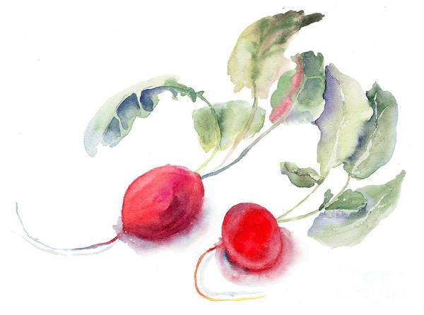 Ingredient Painting - Garden Radish by Regina Jershova