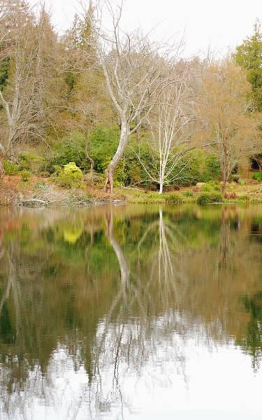 Photograph - Garden Reflection by Marilyn Wilson