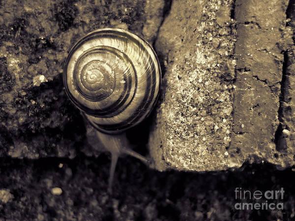 Photograph - Garden Snail by Jeff Breiman