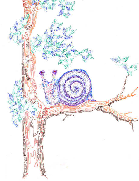 Drawing - Garden Snail by Regina Valluzzi