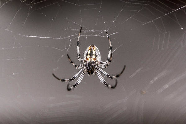 Digital Art - Garden Spider by Photographic Art by Russel Ray Photos