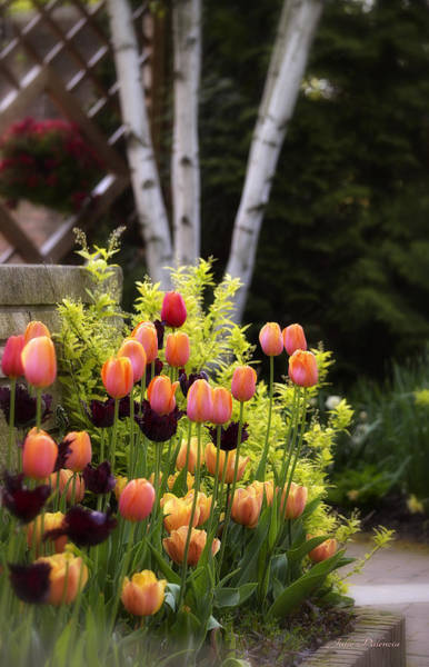 Photograph - Garden Tulips by Julie Palencia