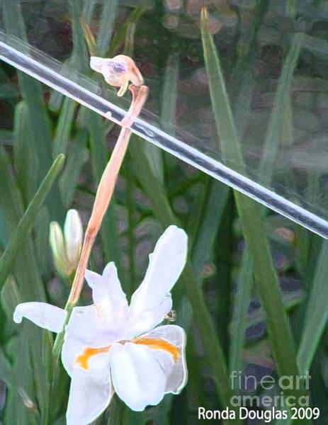 Photograph - Garden Under Glass by Ronda Douglas