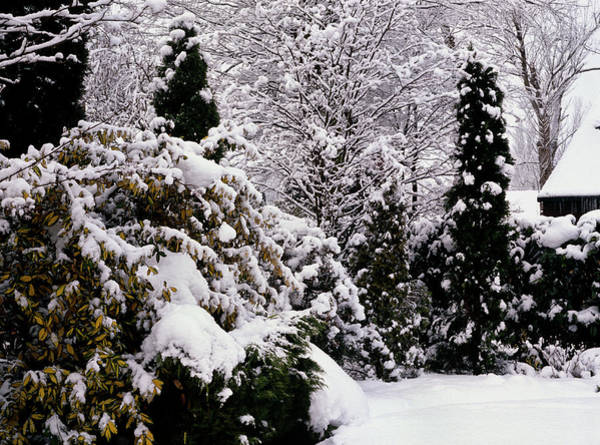 Juniper Photograph - Garden Under Snow by Anthony Cooper/science Photo Library
