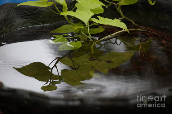 Photograph - Garden Vine by Dale Powell