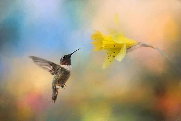 Photograph - Garden Visitor by Jai Johnson