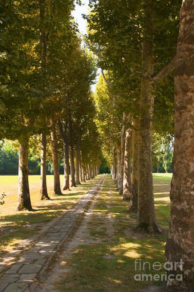 Photograph - Garden Walk At Villa Malcontenta by Brenda Kean