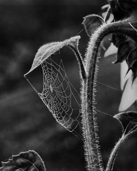 Spiderweb Photograph - Garden Web by Susan Capuano