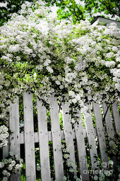 Photograph - Garden With White Fence by Elena Elisseeva