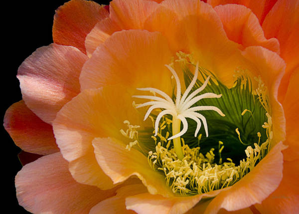 Cactaceae Photograph - Garden Within by Julie Palencia