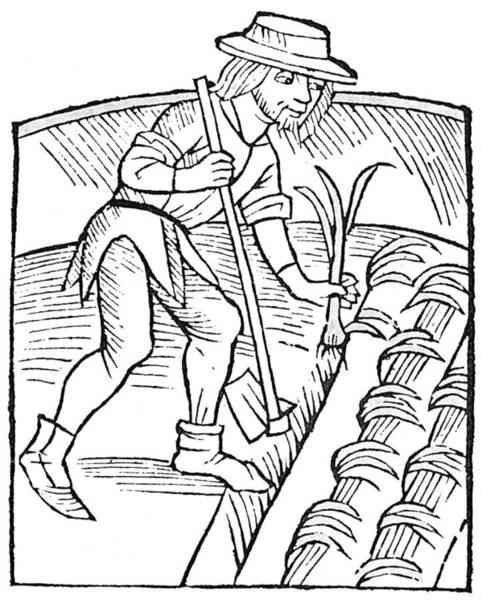 German Renaissance Drawing - Gardener Planting Leeks by Granger