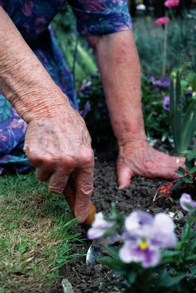 Trowel Photograph - Gardening by Jerry Mason/science Photo Library