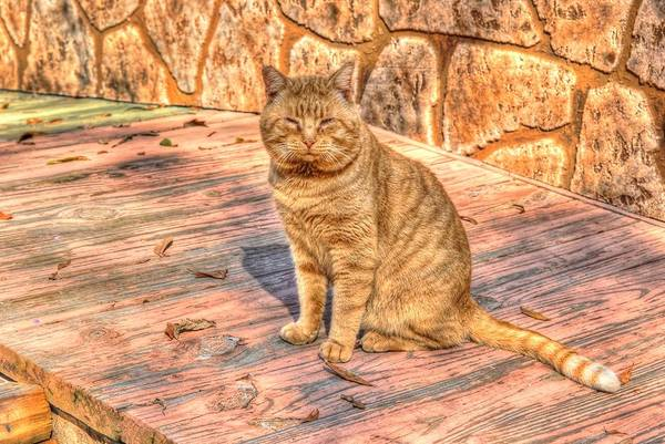 Photograph - Garfield 01 by Donald Williams