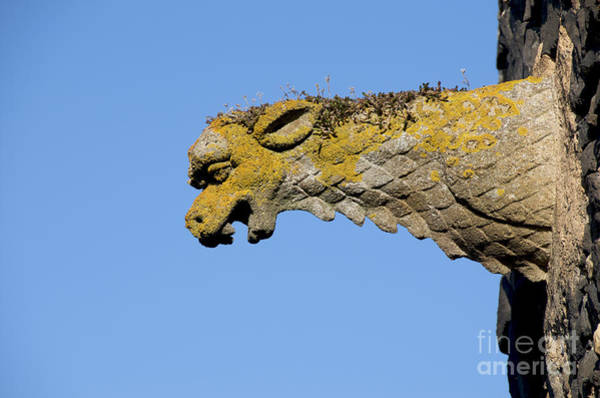 Wall Art - Photograph - Gargoyle by Bernard Jaubert